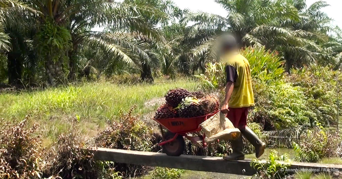 234666_Child_worker_in_palm_oil_plantation__web