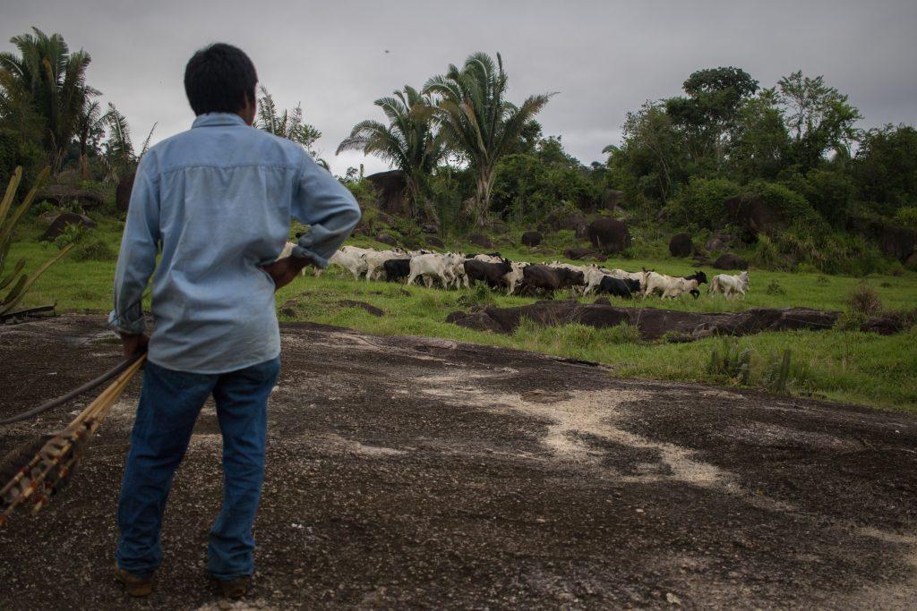 261965_Brazil - illegal land seizures in Indigenous territories