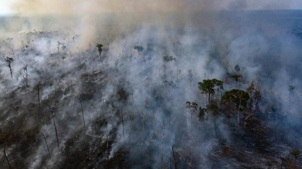 El Estado de Brasil debe tomar medidas urgentes para hacerle frente a los incendios del Amazonas YA.